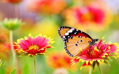 Are you chasing butterflies?